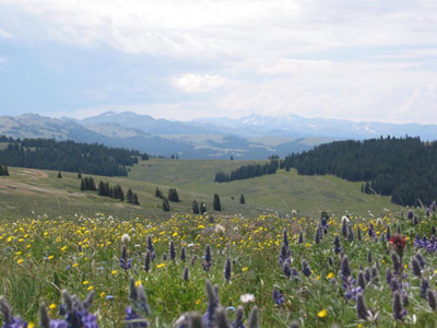 Best Trails near Sheridan - Wyoming   Photos & Reviews   AllTrails